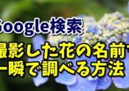 Google グーグル 画像検索 Google画像検索